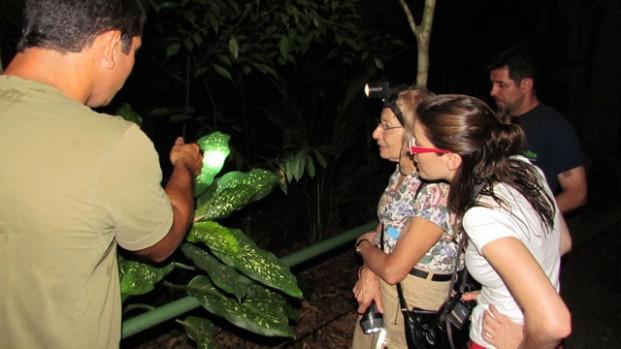 The Jungle Night Walk
